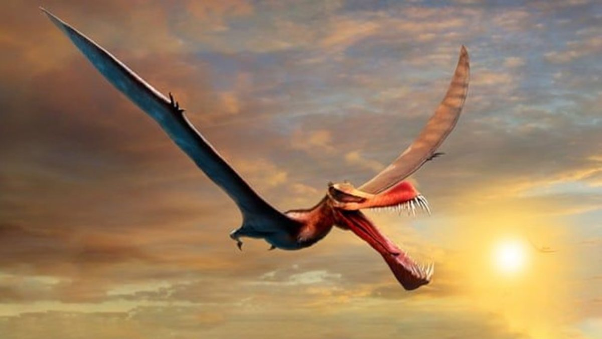 Avustralyada bulunan fosil, uçan dinozora ait çıktı
