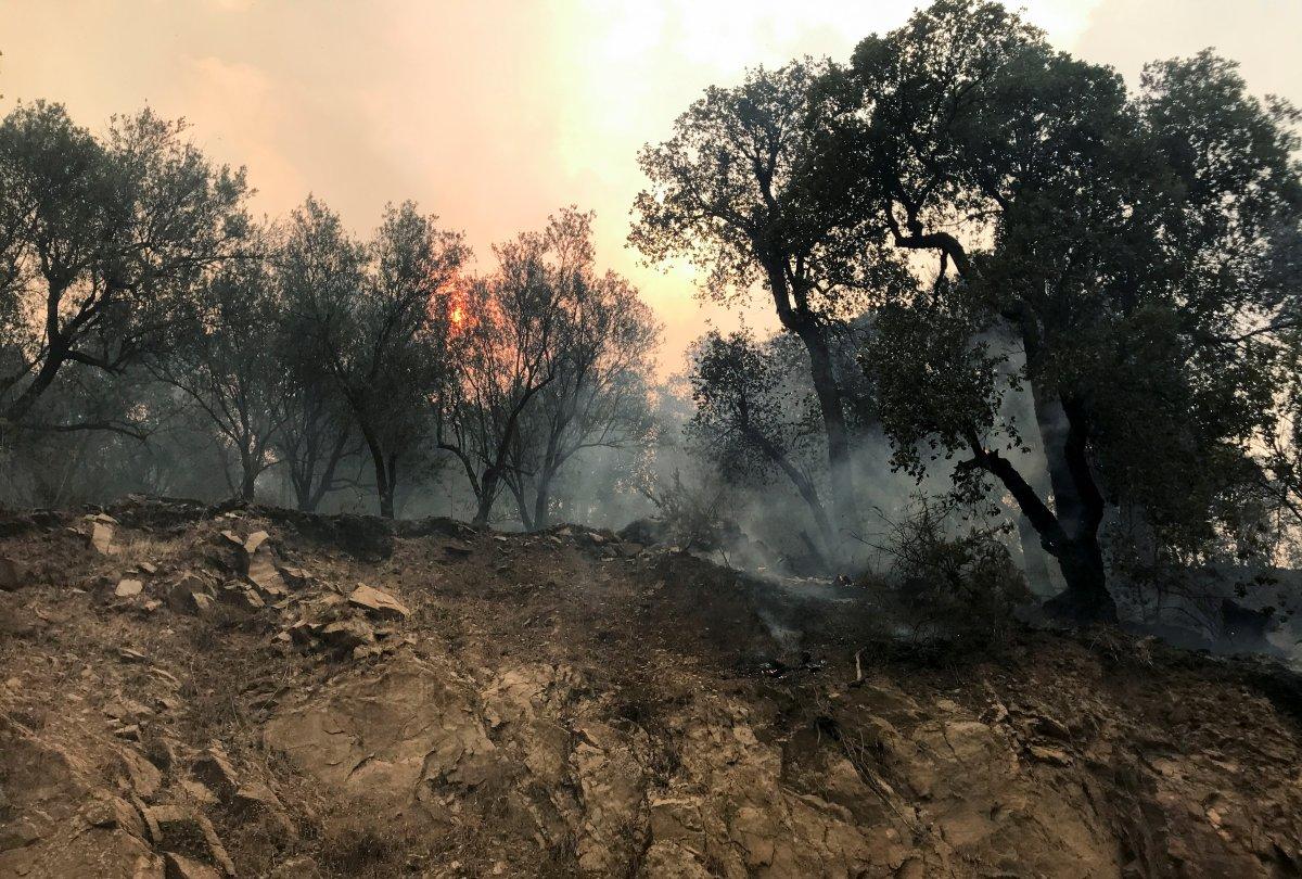 Mevlüt Çavuşoğlu ndan Cezayirli mevkidaşına yangınlarda ölenler için taziye telefonu #3