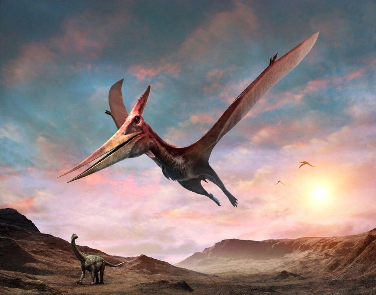 Avustralya da bulunan fosil, uçan dinozora ait çıktı #1