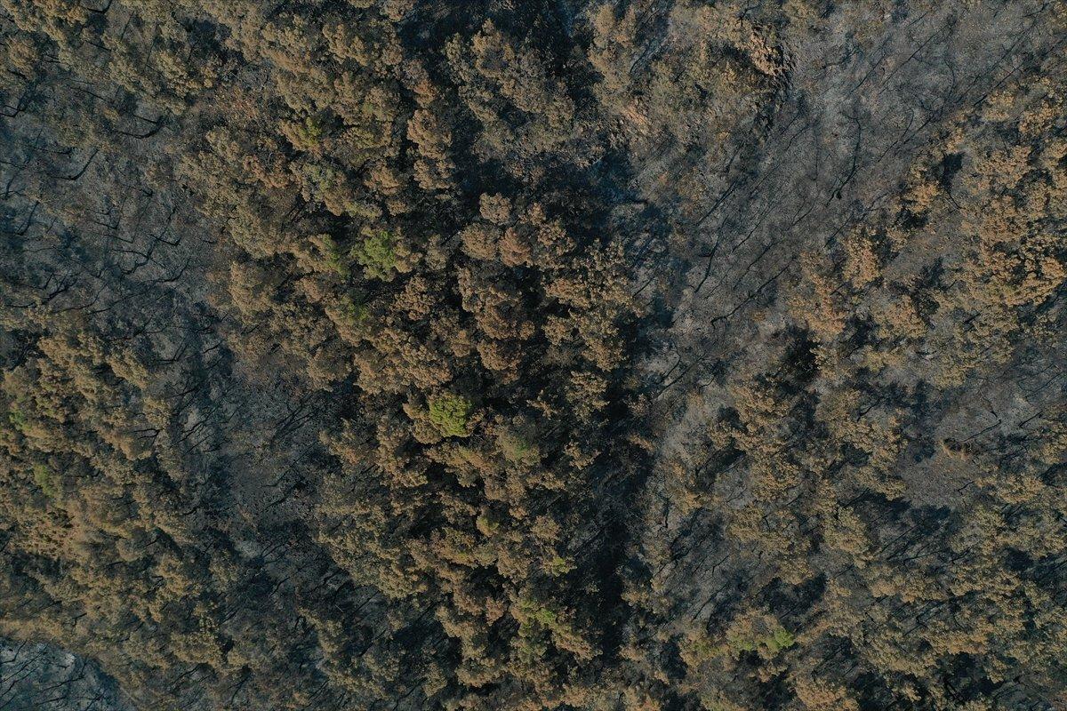 Marmaris Kızkumu Plajı çevresinde yanan ormanlık alanlar havadan görüntülendi #7