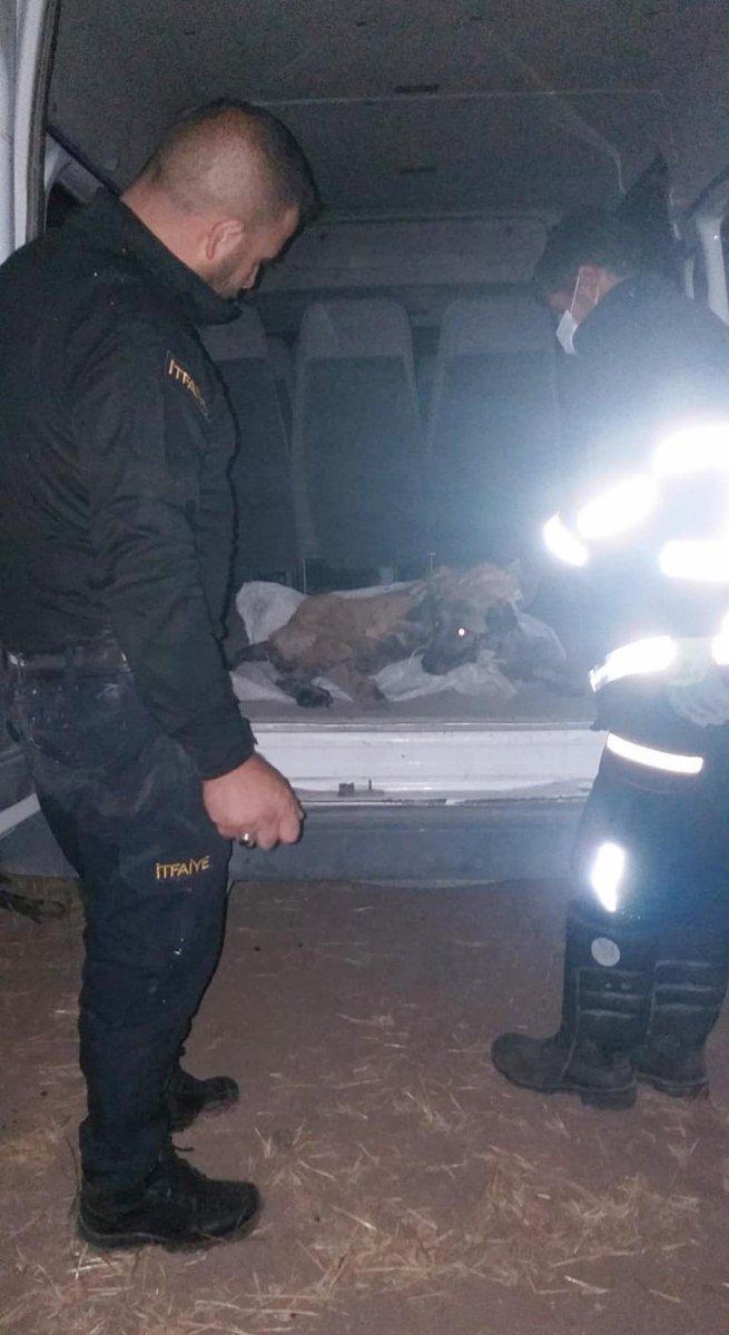 Ağrı da zifte yapışan köpek, 2 saatte kurtarıldı #3