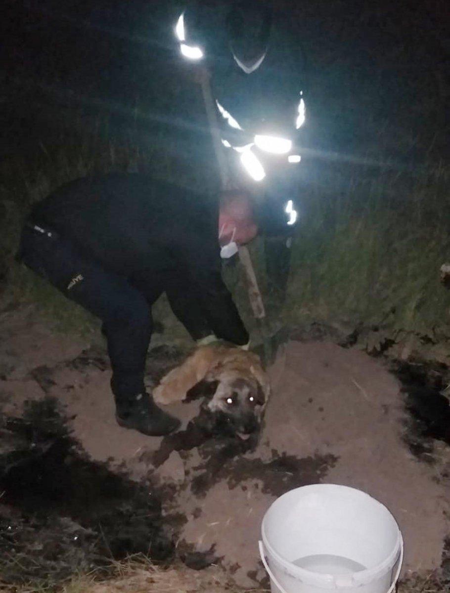 Ağrı da zifte yapışan köpek, 2 saatte kurtarıldı #1