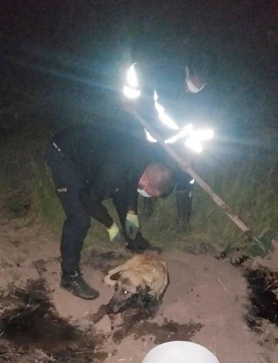 Ağrı da zifte yapışan köpek, 2 saatte kurtarıldı #2