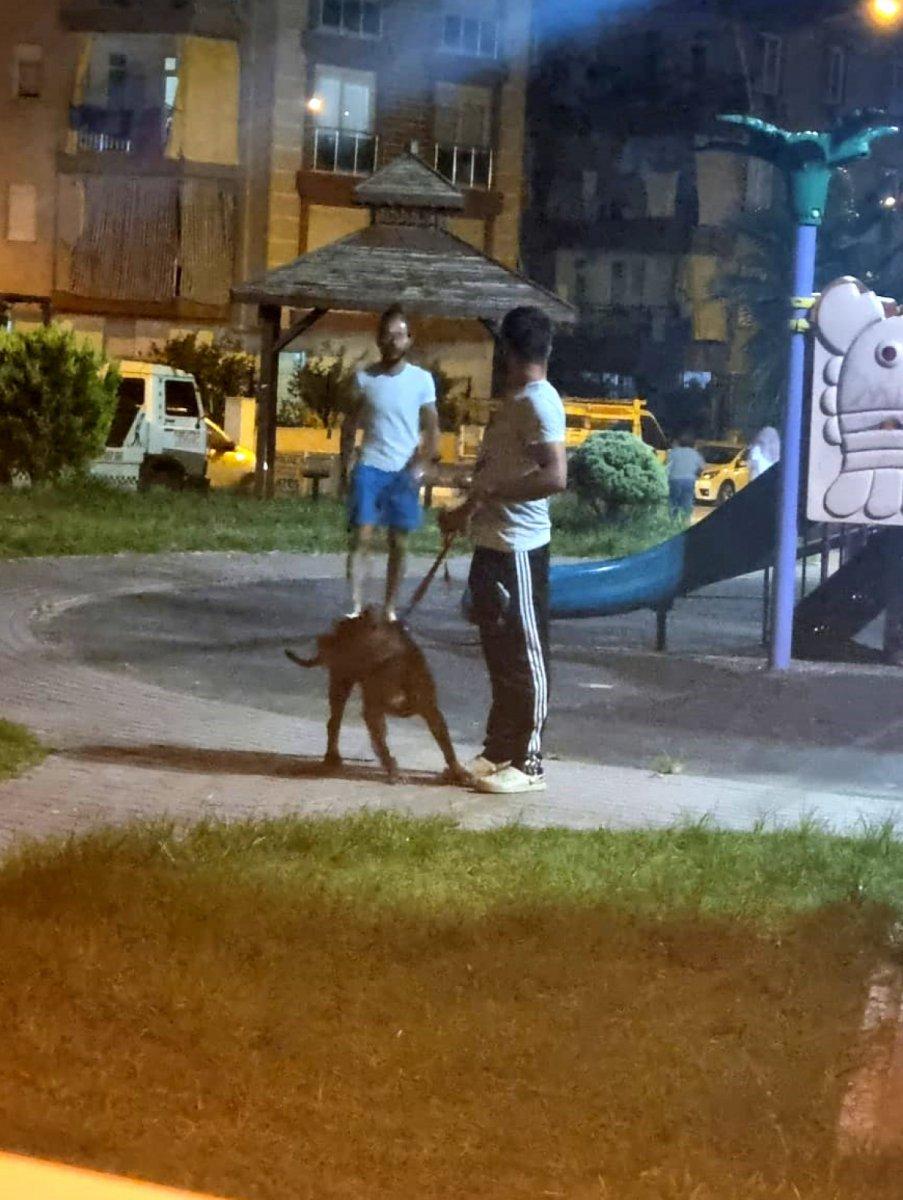 Antalya'da bir kadın, 2 pitbull köpeğinin saldırısına uğradı #4