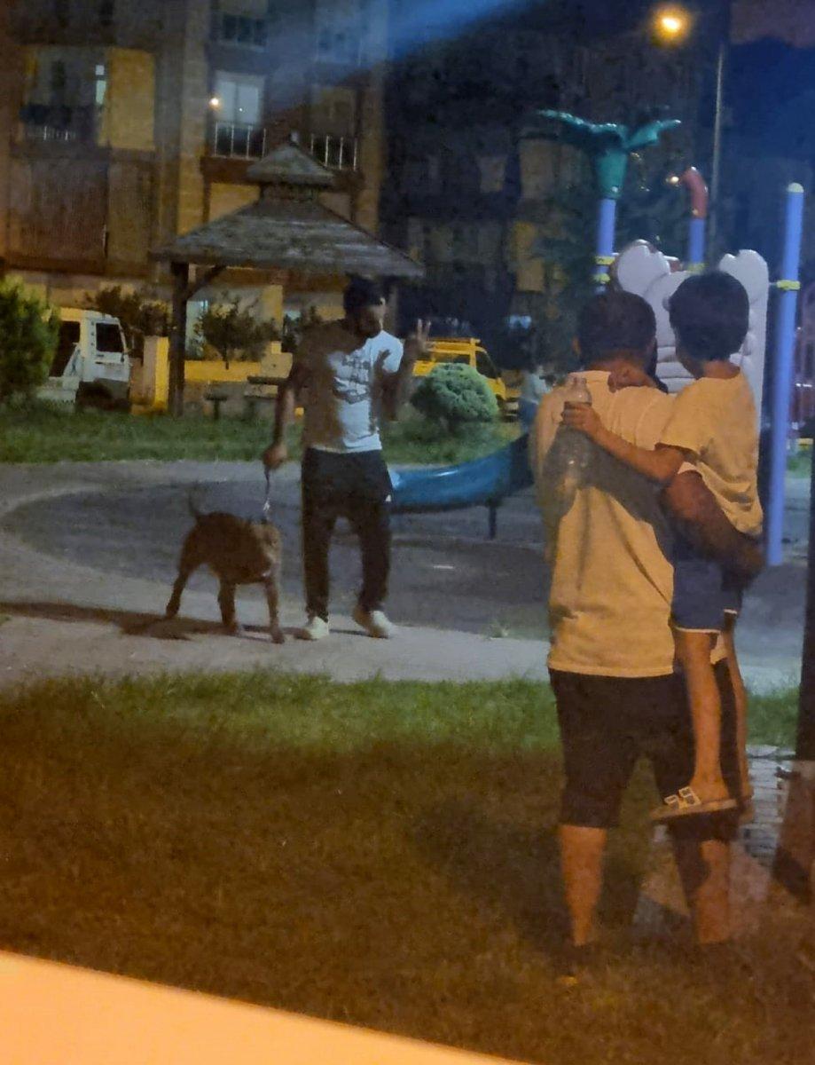 Antalya'da bir kadın, 2 pitbull köpeğinin saldırısına uğradı #3