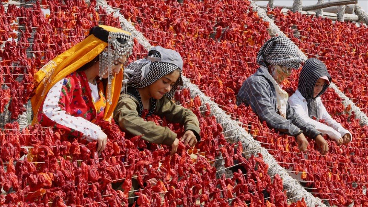 Gaziantep te yaz lezzetleri kurutularak kışa hazırlanıyor #7