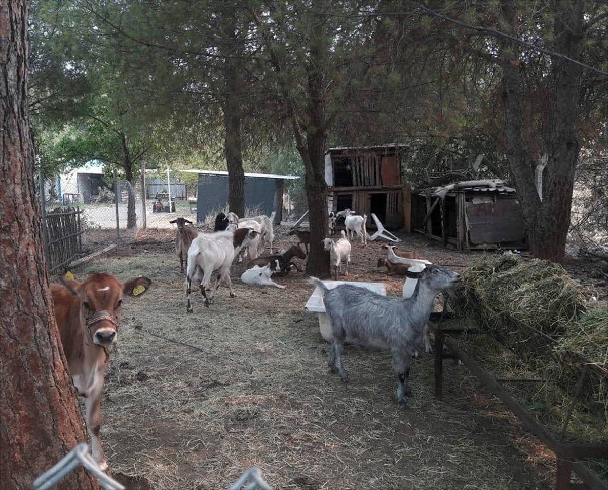 Marmaris te yangından etkilenen hayvanlar bakımevine alındı #2