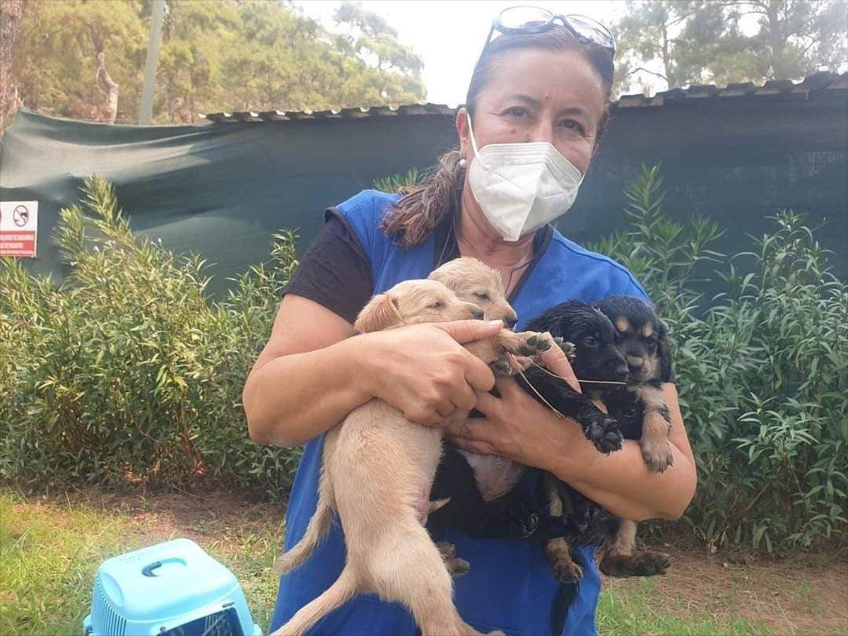 Marmaris te yangından etkilenen hayvanlar bakımevine alındı #1