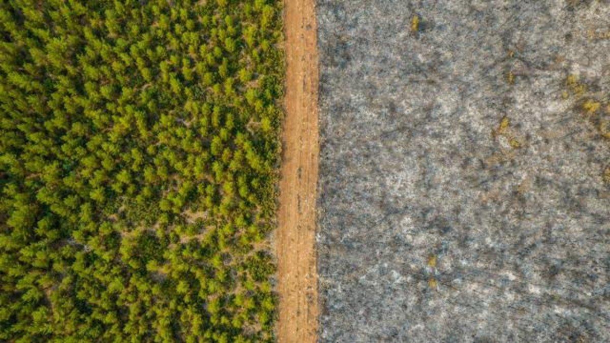 Yanan ormanların yerine dikilecek ağaçlar açıklandı #3