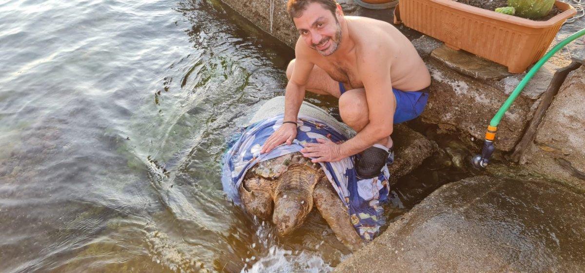 Muğla da hasta olan kaplumbağaya yardım ettiler #2