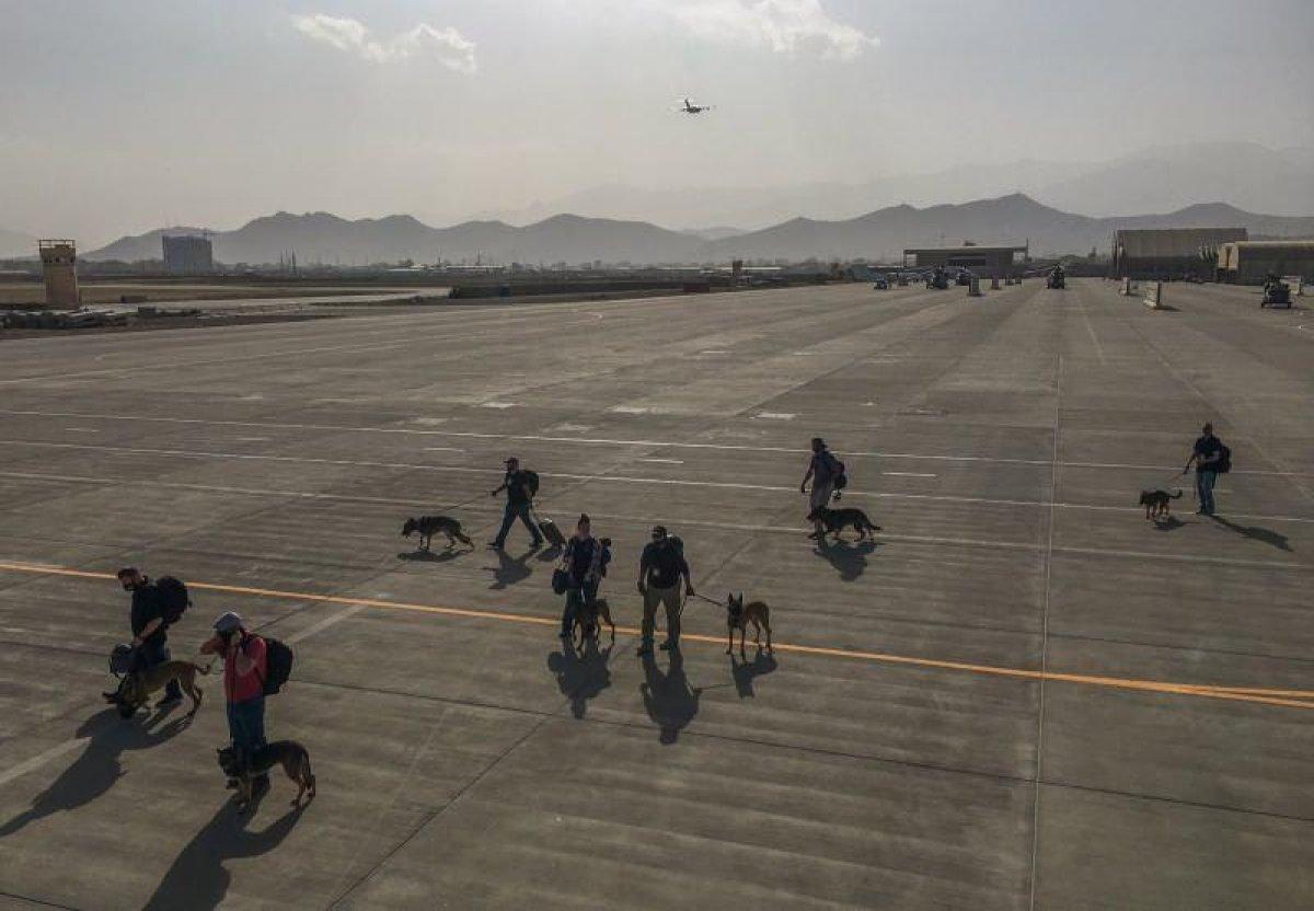 ABD, asker köpeklerini uçakla tahliye etti #1