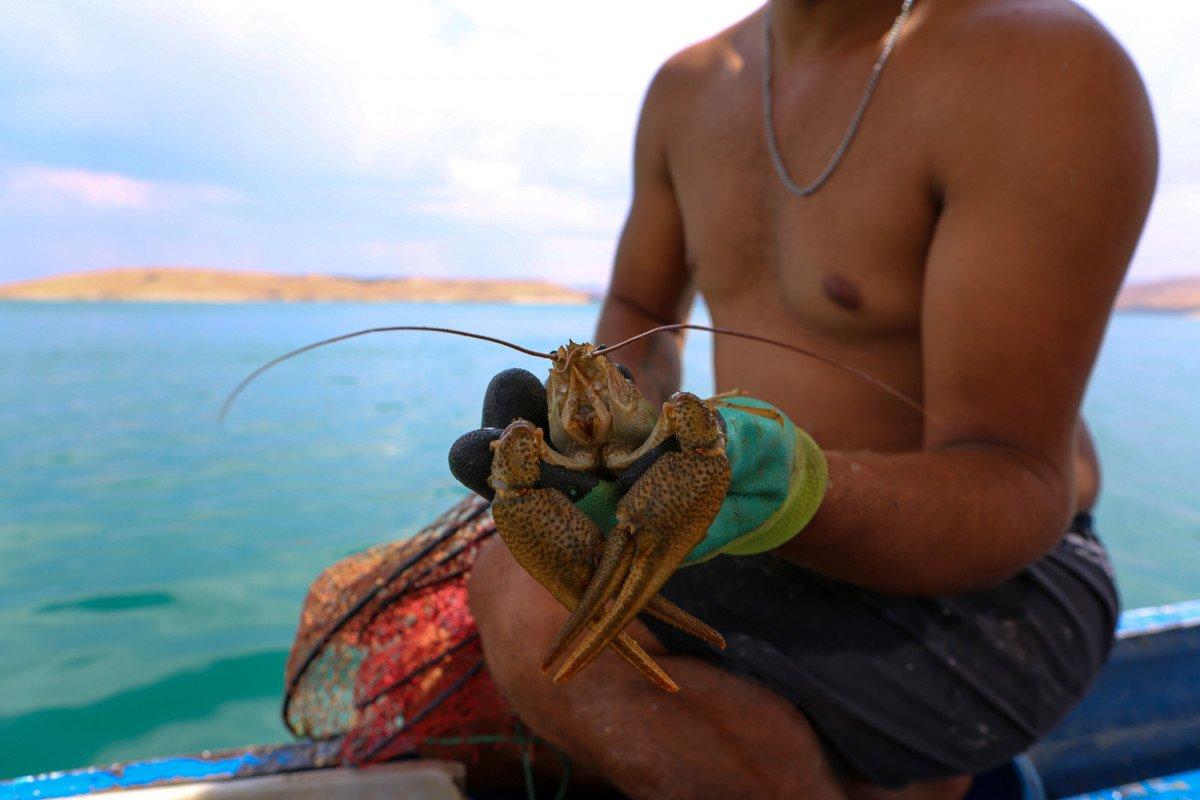 Tuncelili genç, avladığı kerevitten binlerce lira gelir sağlıyor #5