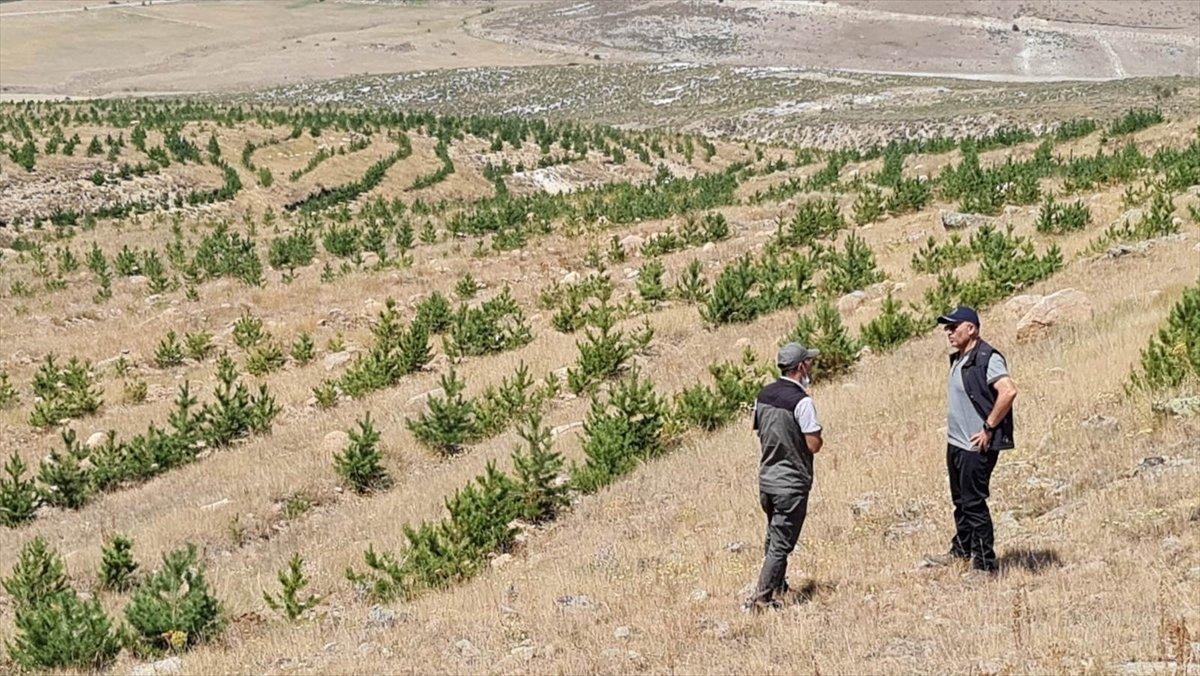 Erzurum un çorak toprakları fidanlarla vahaya dönüştü #3