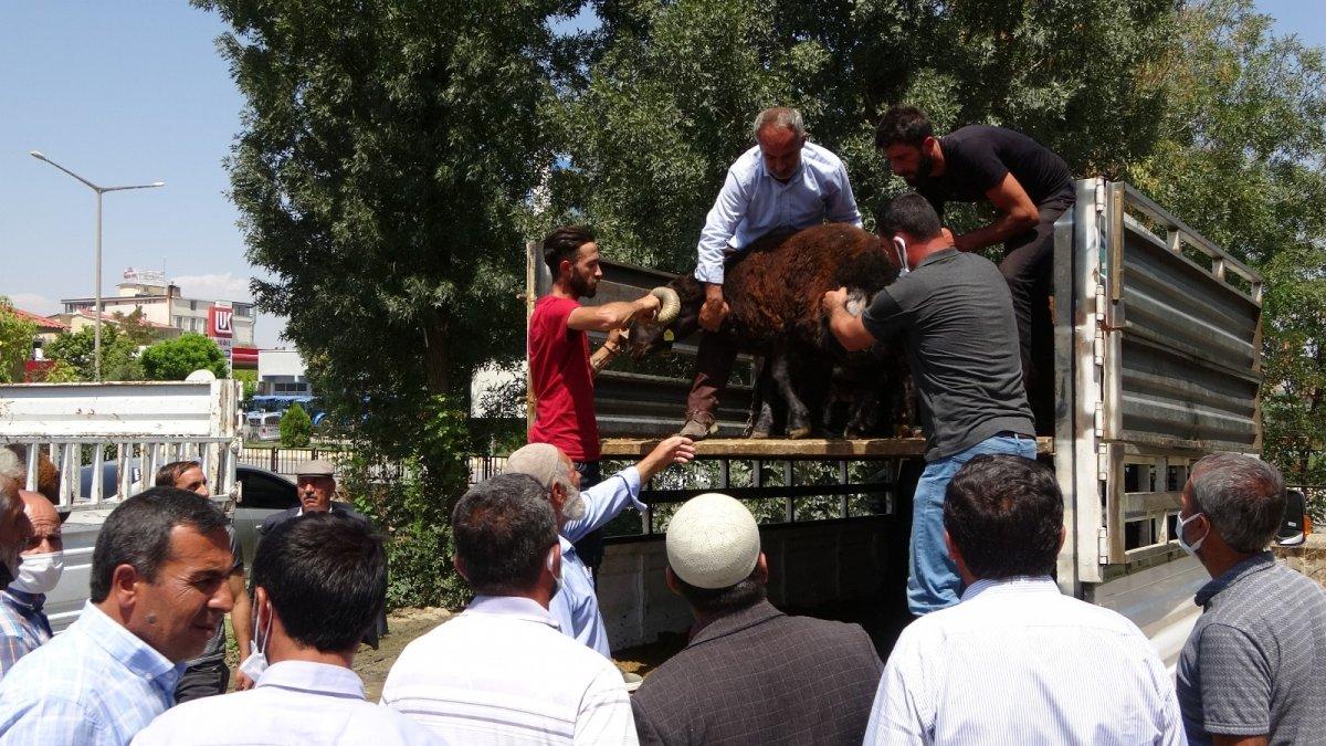 Muş'ta çiftçilere yarısı devlet destekli koç dağıtımı yapıldı #1