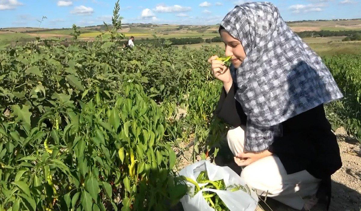 Müşteriler satın alacakları sebzeleri kendi elleri ile topluyor #4