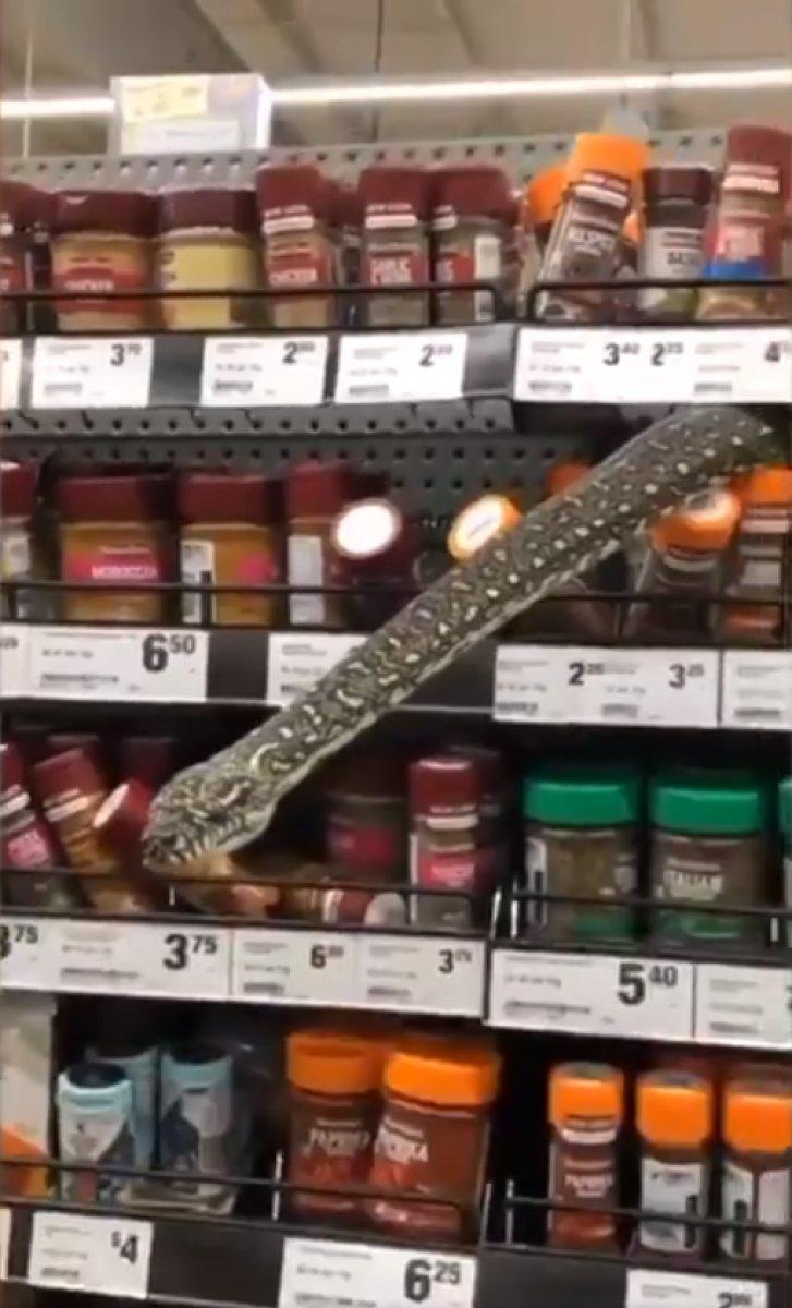 Avustralya daki markette 3 metre boyunda yılan görüldü #1