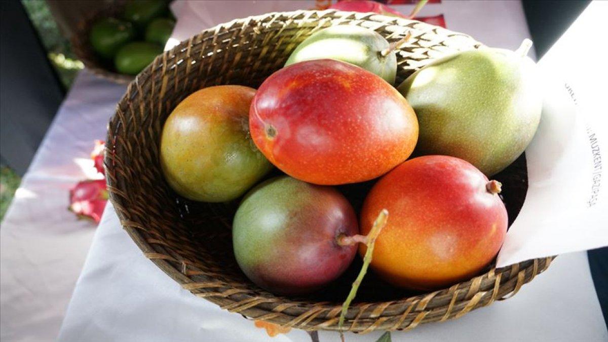 E vitamini açısından zengin 10 besin #7
