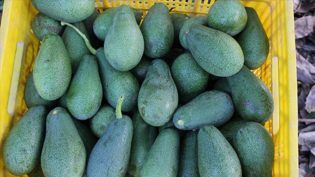 E vitamini açısından zengin 10 besin #3