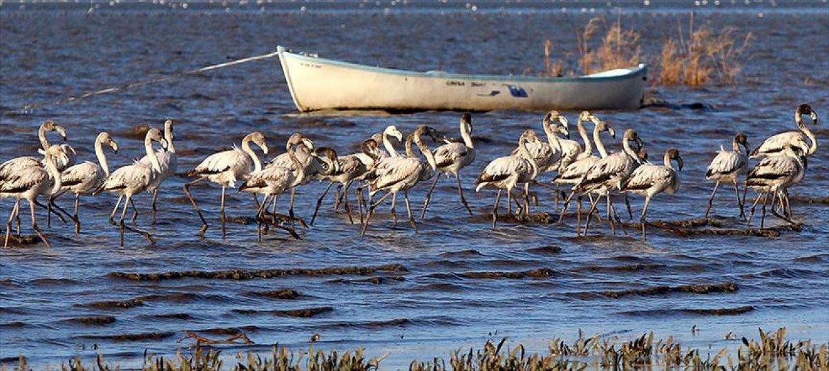 Balıkesir, Bolu ve Giresun daki sit alanları, kesin korunacak hassas alan oldu #1