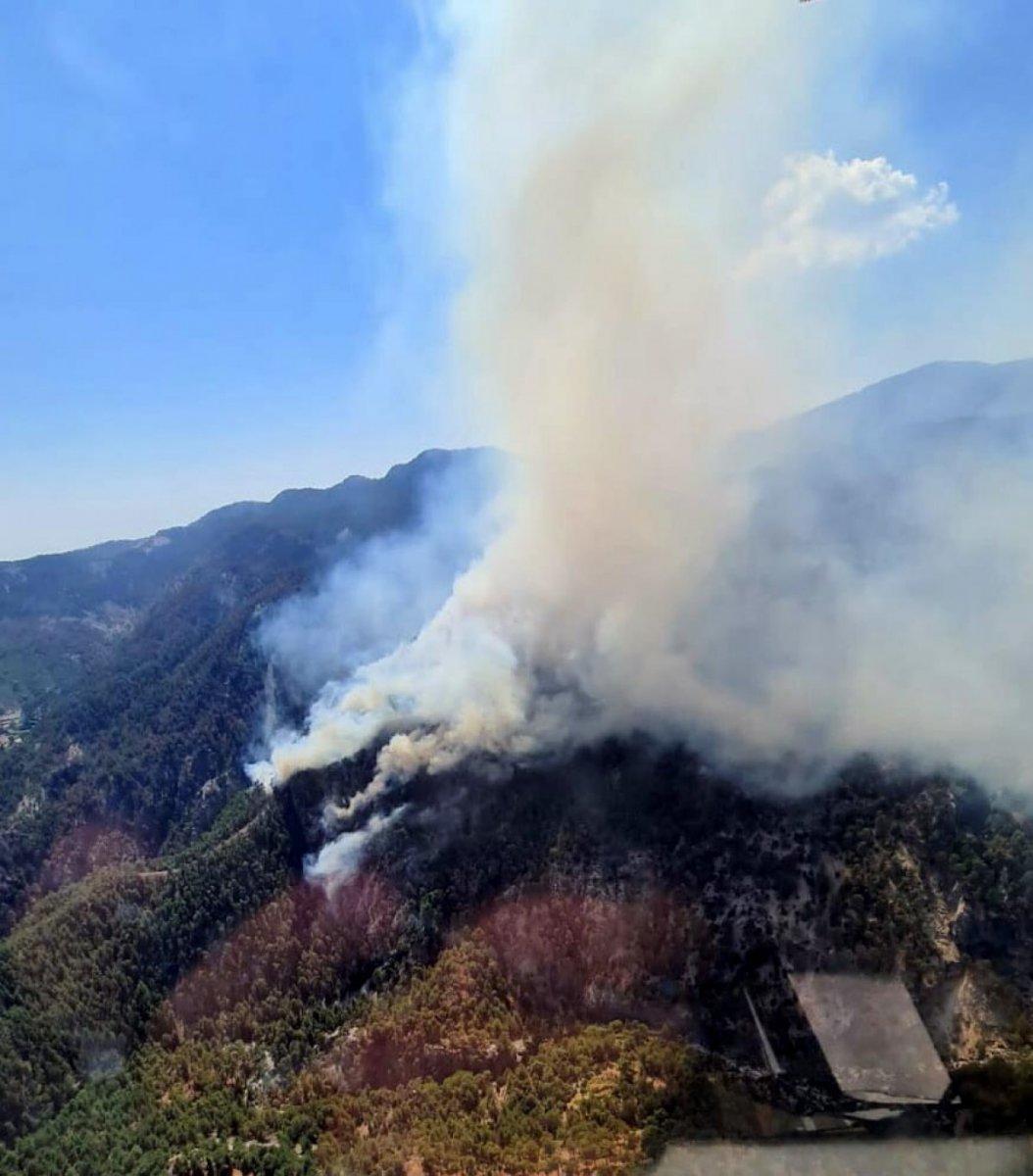 Muğla Köyceğiz de orman yangını #2