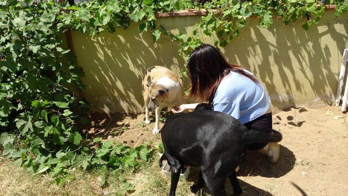Tekirdağlı hayvansever Özay Kaya: Sokak hayvanına bu muameleme yapılamaz #3