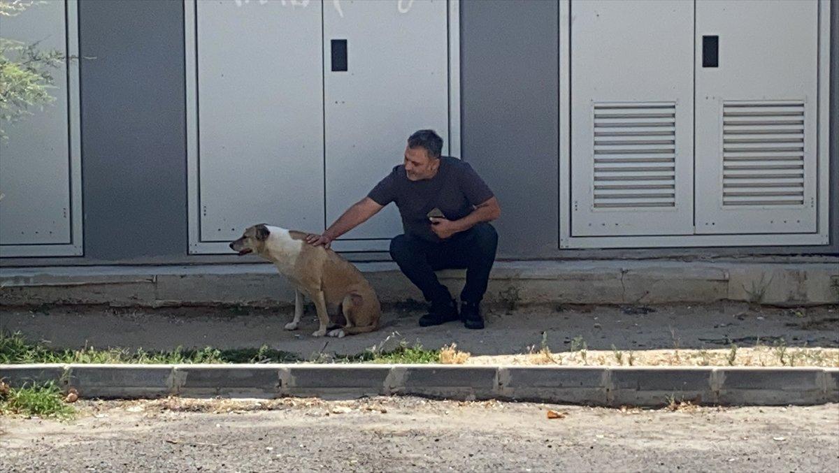 Tekirdağlı hayvansever Özay Kaya: Sokak hayvanına bu muameleme yapılamaz #2