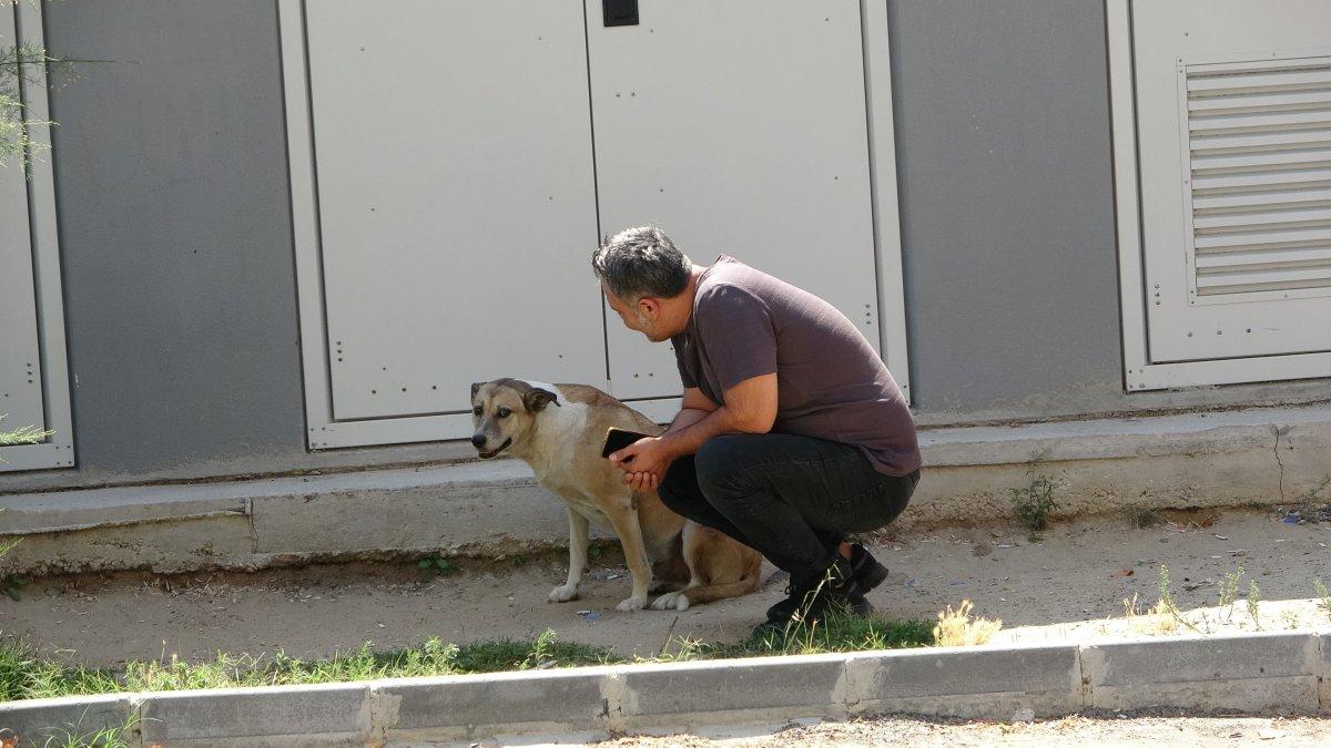 Tekirdağlı hayvansever Özay Kaya: Sokak hayvanına bu muameleme yapılamaz #1