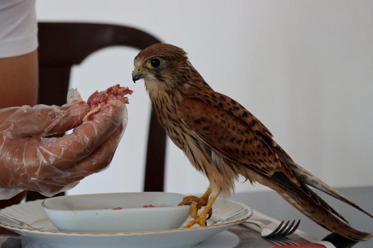 Adıyaman da atmaca yavrusu ile lokantacının dostluğu #3