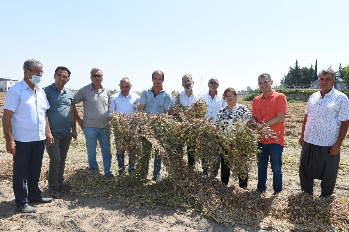 Tarsus'ta Ayşehanım fıstığı hasat şöleni sürüyor #1