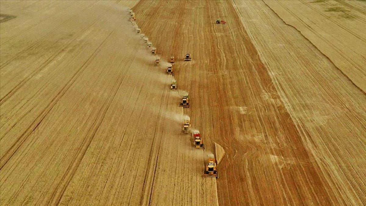 Hububat, bakliyat ve yağlı tohumlarda ihracat 8 milyar doları geçti #1