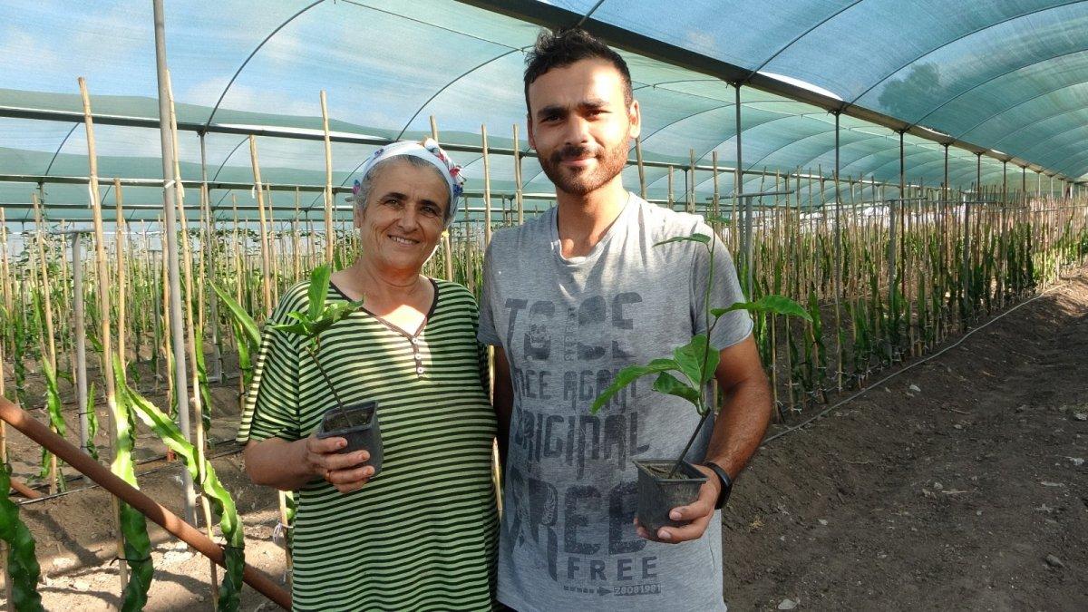 Adana da hayvan yemi ekilen tarlayı, tropikal meyve serasına dönüştürdü #1
