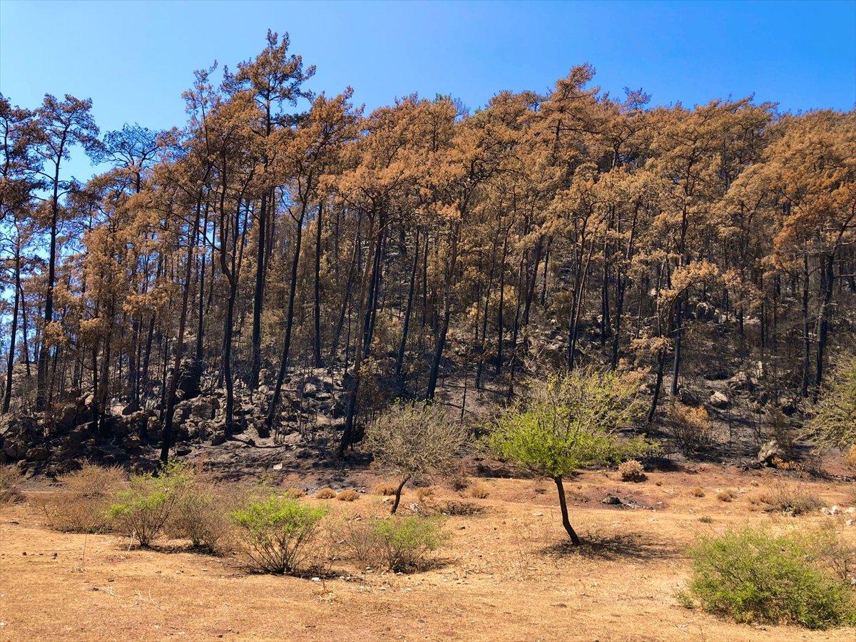 Marmaris te yangınlar sonrası doğa canlanmaya başladı #2