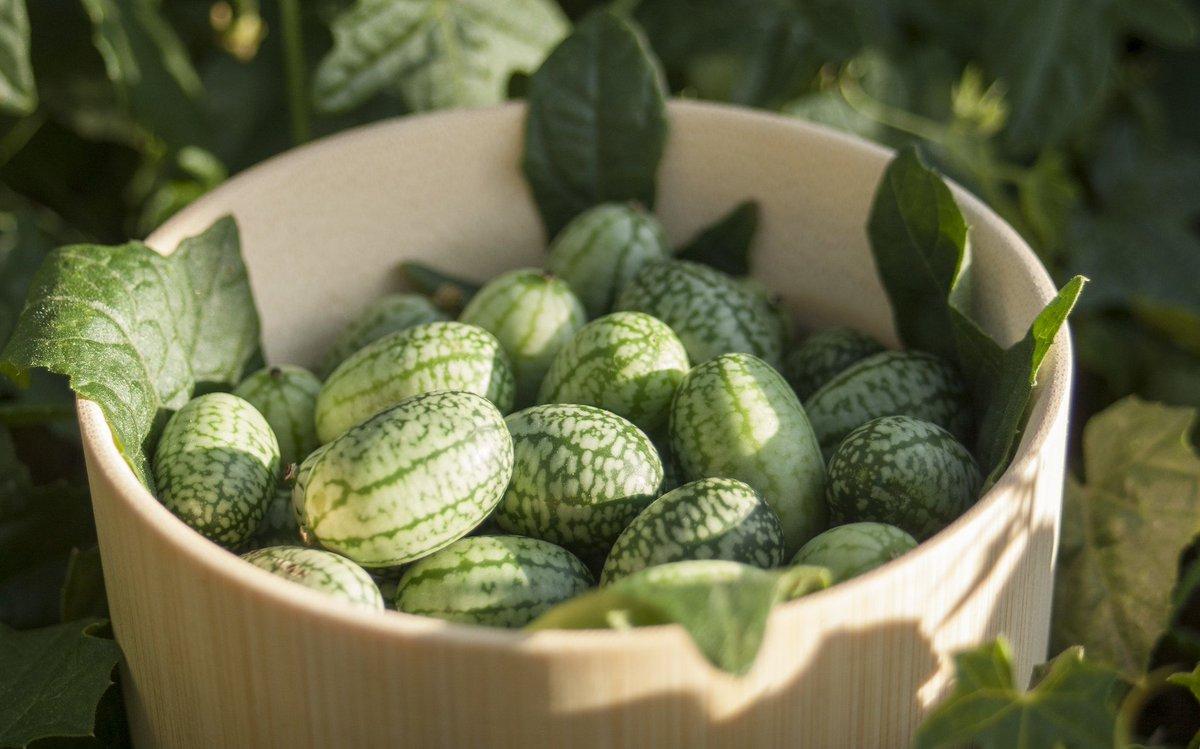 Dışı karpuz içi salatalık: Cucamelon meyvesinin faydaları #3