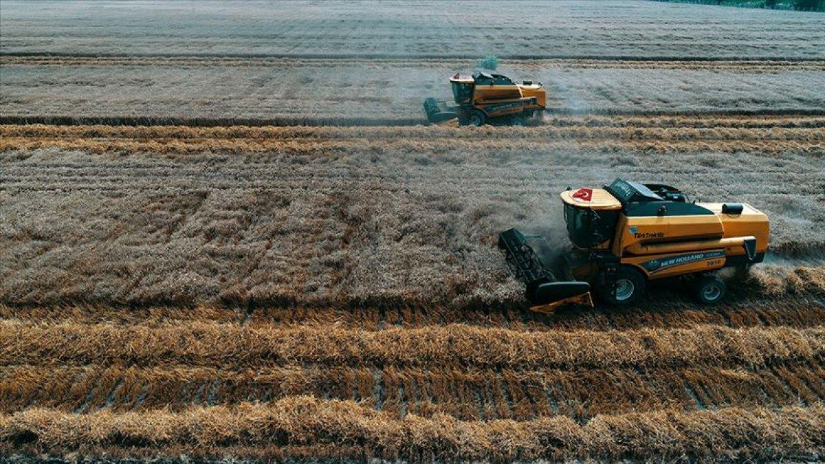 TMO mısır satışlarına başlayacak #2