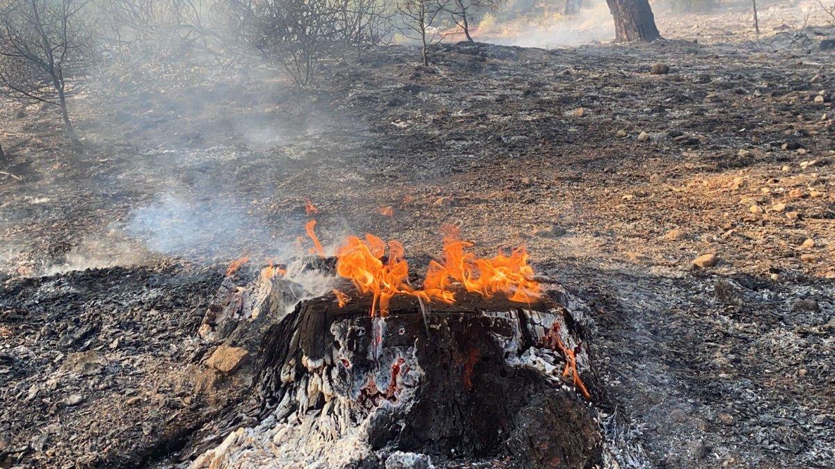 Muğla daki yangın kontrol altına alındı #2