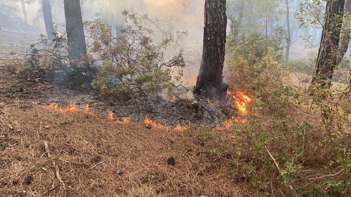 Muğla daki yangın kontrol altına alındı #6
