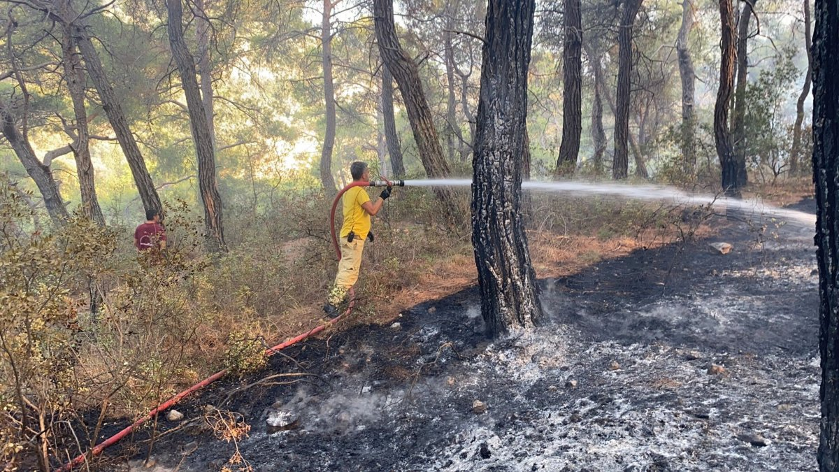 Muğla daki yangın kontrol altına alındı #5