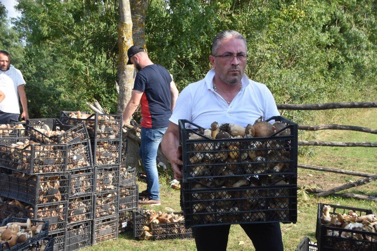Sinop ormanlarında toplanan mantarlar ek gelir kapısı #5