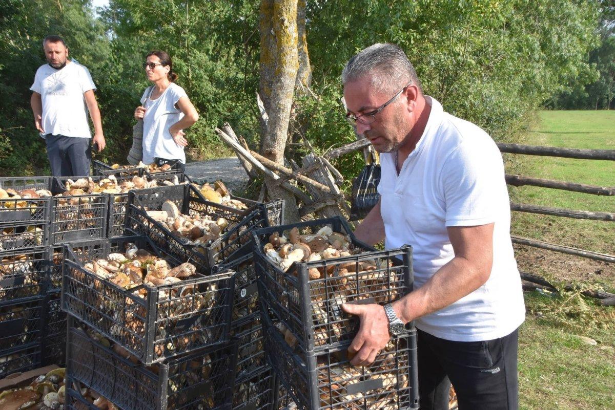Sinop ormanlarında toplanan mantarlar ek gelir kapısı #3