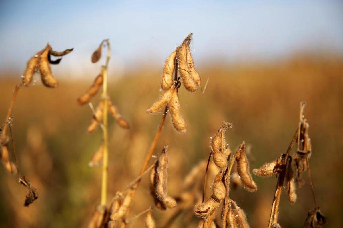Soya fasulyesi fiyatları dünyada geriledi #1