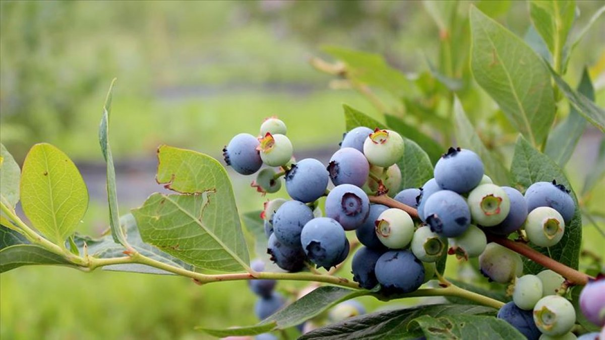 Antioksidan gücü en yüksek 9 besin #2