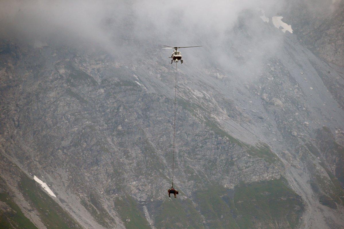 İsviçre de yaralanan inekler, helikopterle meradan alındı #7
