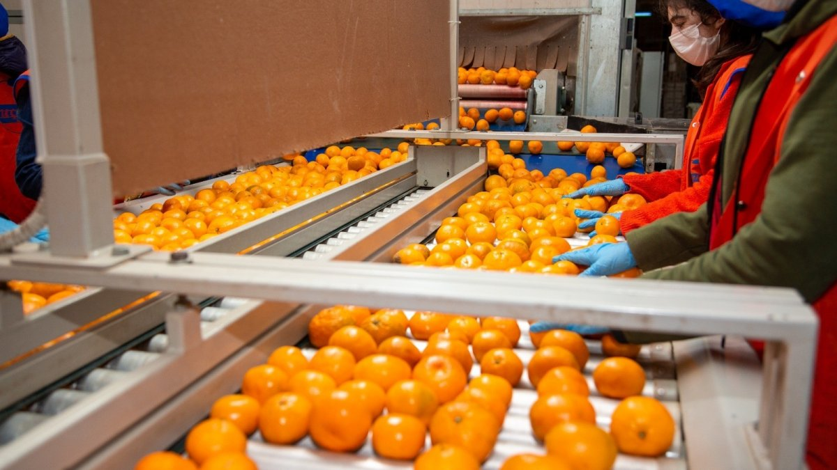Taze meyve sebze sektörüne iki destek geldi #1