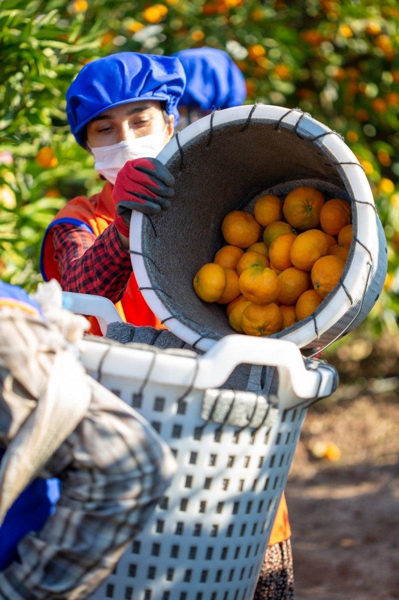 Taze meyve sebze sektörüne iki destek geldi #2
