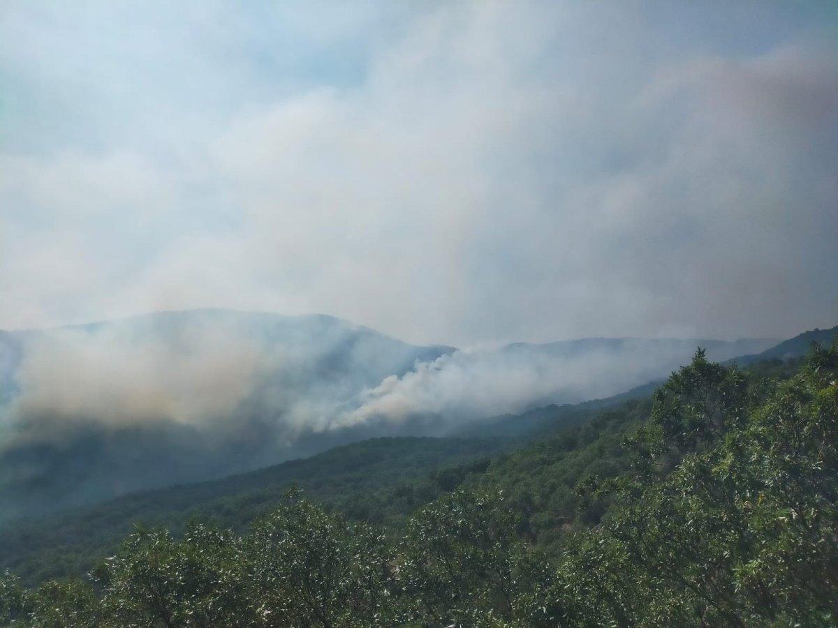 Tunceli Valiliği'nden orman yangınlarına ilişkin açıklama #2