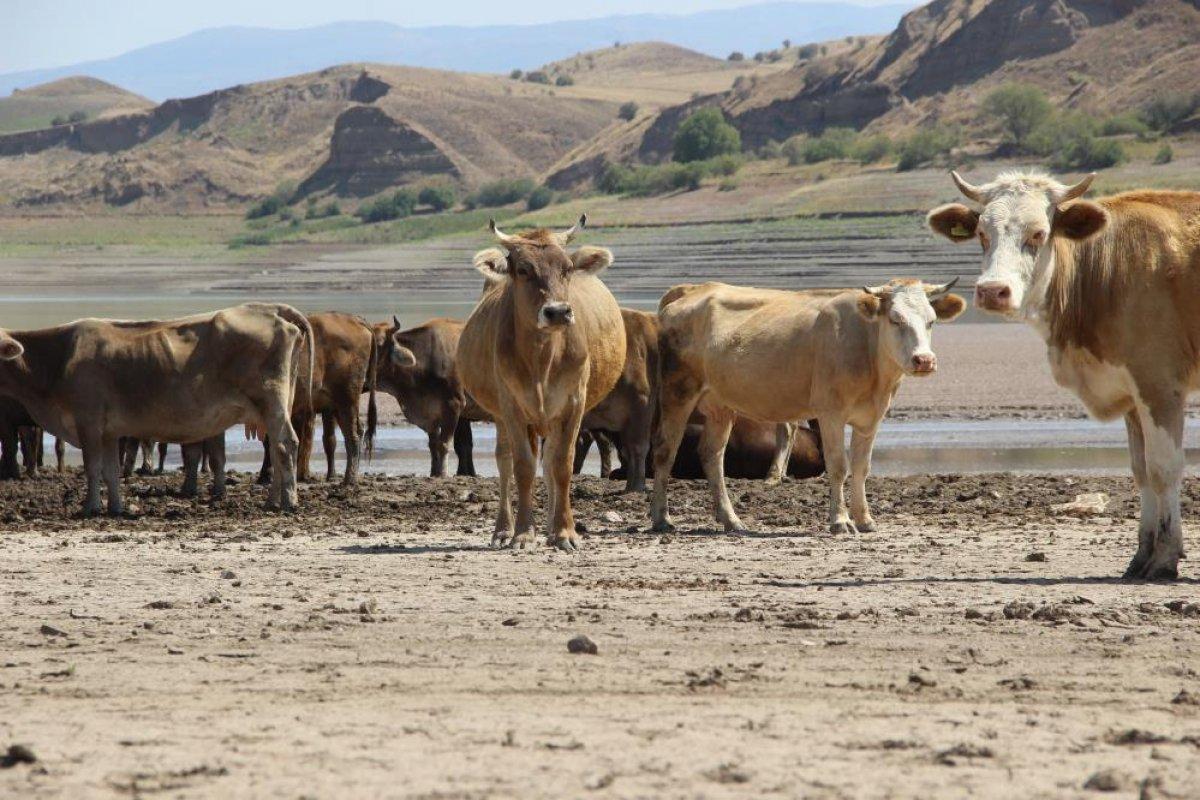 Sivas ta suların çekildiği baraj, yürüyüş alanına döndü #9