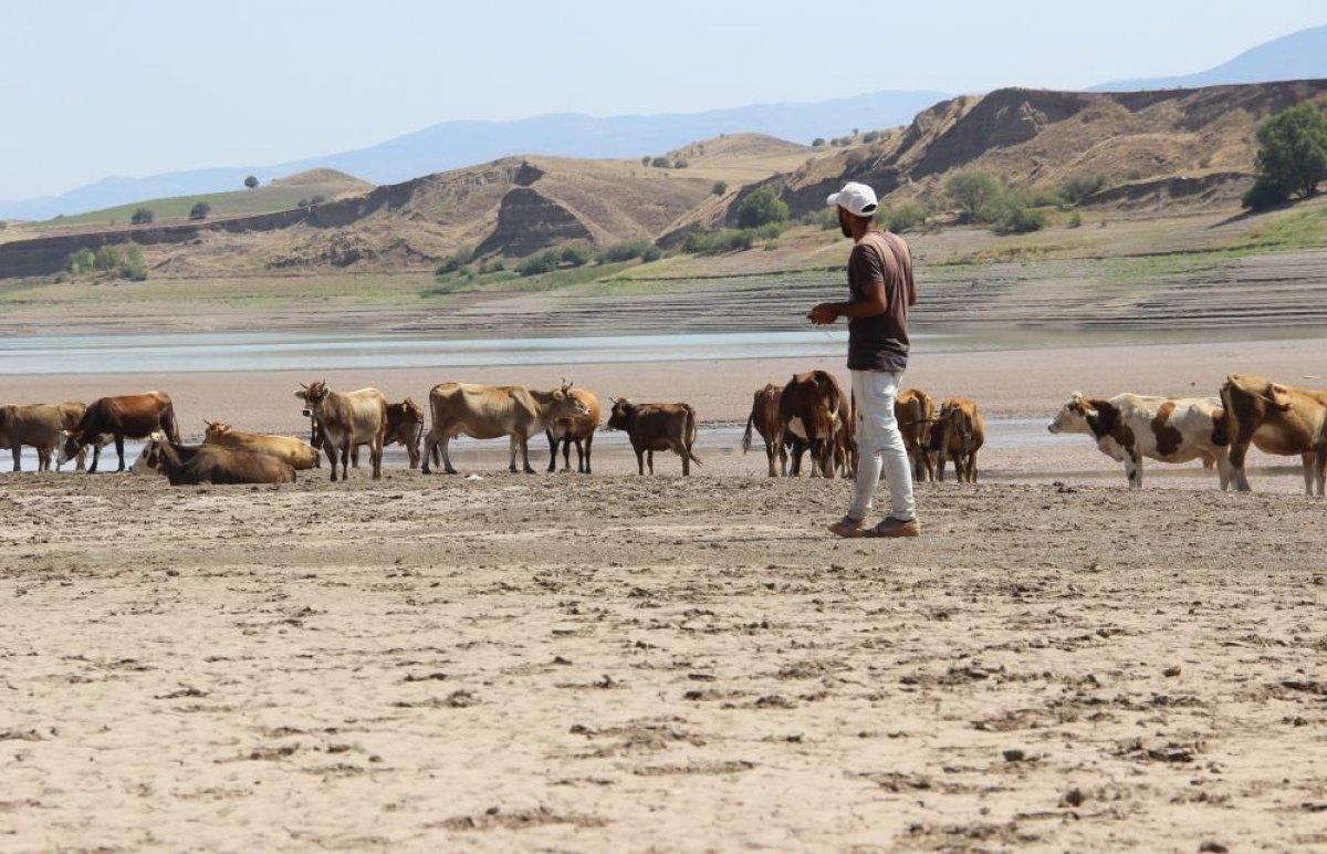 Sivas ta suların çekildiği baraj, yürüyüş alanına döndü #8