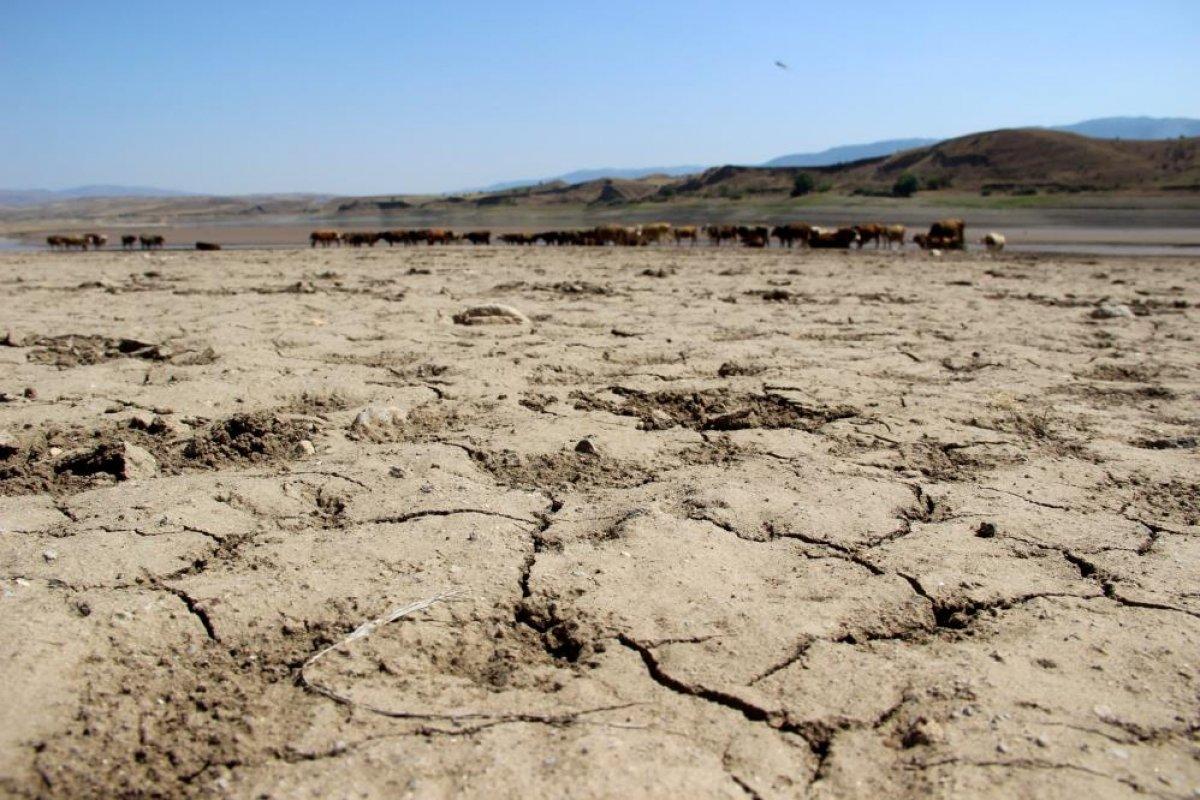Sivas ta suların çekildiği baraj, yürüyüş alanına döndü #4