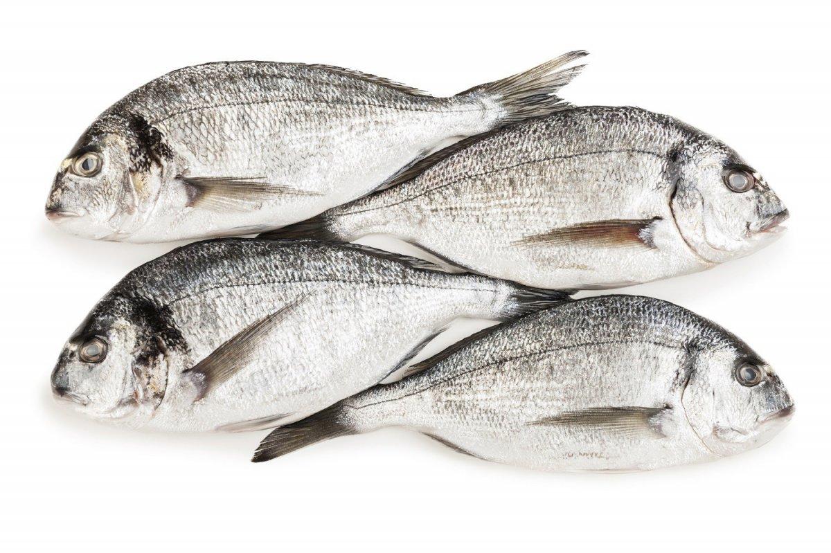 Balık tüketimi vücut direncini artırıyor #3