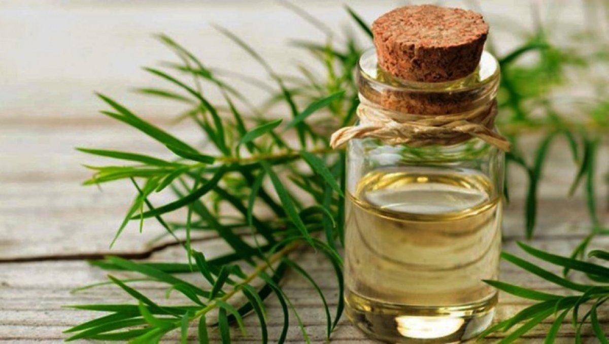 Bir damlası bile etkili: Çay ağacı yağının 7 mucizevi faydası #1